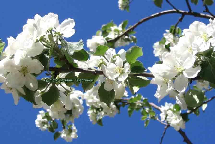 Показаны картинки по запросу цветущая